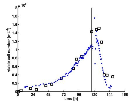 Figure 2: Growth of MDCK cells in serum containing medium (GMEM, 5 L wv, 2 g/L MC). Viable cell numbers for cultivation and infection: (□) experimental cell number (trypan blue dye); (●) estimated viable cell number using online data of oxygen uptake rate; vertical line at 116 h ▬ infection
