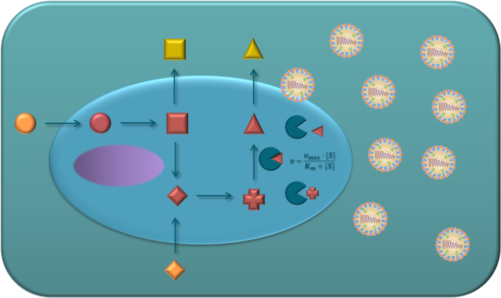 Fig. 1 Extracellular (orange and yellow) and intracellular (red) metabolites build together with enzyme kinetics the metabolic cell network. Viral infections can affect the cell network on multiple levels depending on cell line and virus type.
