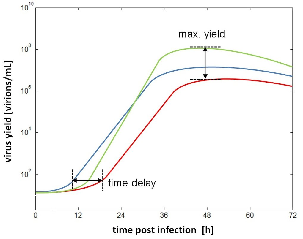 "<p style=""text-align: left;"" align=""center""><em>Variability of maximum virus yield and the time delay before cells start to release considerable amounts of progeny virus particles.</em></p>"