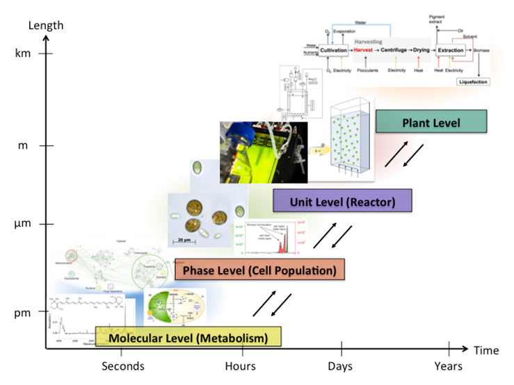 Figure 1: Multi-scale representation of an algal-based production system. The different length and time scales can be associated to the molecular, phase, process unit and plant level.