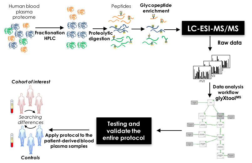 Figure 1: N-Glycoproteomic workflow for the discovery of disease-associated N-glycosylation alterations in human blood plasma glycoproteins.